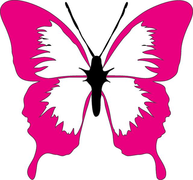 butterfly-304136_640